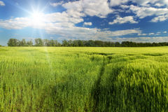 Sunshine over the spring green field, South Moravia, Czech Stock Photos