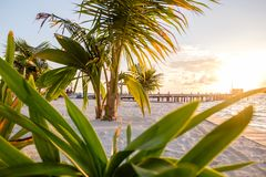 Sunshine through the palm fronds. Picture taken on the island of Caye Caulker, Belize Stock Photos