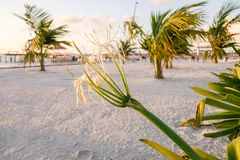 Sunshine through the palm fronds stock photography