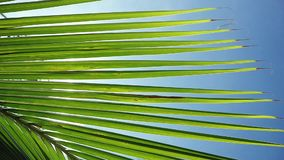 Sunshine through palm leaves with sun background with lens flare effects in slow motion. 1920x1080. Panning through palm leaves with sun background with lens stock footage