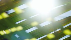 Sunshine through palm leaves with sun background with lens flare effects in slow motion. 1920x1080 stock video footage