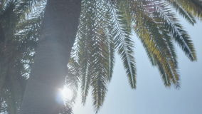 Sunshine Palm Tree Paradise. Low angle medium high dynamic range panning tracking slider shot revealing the sun from behind a palm tree during a late summer stock video footage