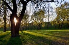 Sunshine in the park. The sun is shining through big tree Stock Photo