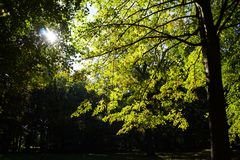 Sunshine in a park. Sunshine in a German Park Royalty Free Stock Image