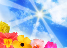 Sunshine Rays and Bright Flowers. Sun rays are shining down on flowers in the corner. The sky is very bright and has clouds Royalty Free Stock Image