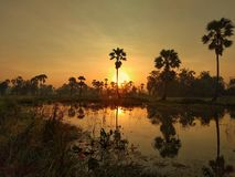 Dawn in the everglades stock images