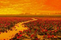 Sunshine rising lotus flower Royalty Free Stock Photo