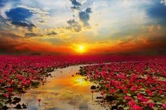 Sunshine rising lotus flower. In Thailand royalty free stock photos