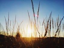 Sunshine. It's my happiness. Ukraine. Spring Stock Photography