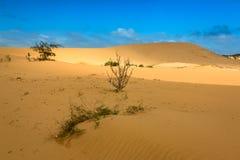 Desert Scene with Sunshine on Sand Dunes stock photos