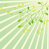 Sunshine scroll floral design Royalty Free Stock Photography