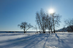 Sunshine and shadow of the tree in winter Stock Image
