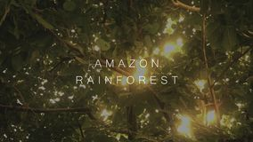 Sunshine shining through a jungle canopy - Amazon Rain forest text. September 6 2018 stock video footage