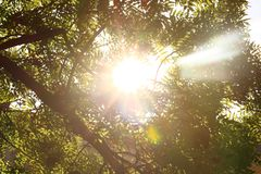 Sunshine. Sky. Bright sun in the sky. Sunlight circles. A solar circle, a bright solar flare, rays in green branches, rays in gree. N trees. Sunset. Sun in the Royalty Free Stock Photos