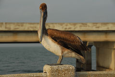 Sunshine Skyway Bridge - Tampa Bay, Florida Royalty Free Stock Images