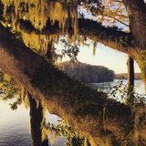 Sunshine and Spanish moss Stock Images