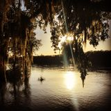 Sunshine and Spanish moss Stock Photos