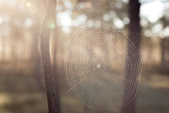Sunshine and spiderweb Stock Image