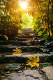 Sunshine stone stairs. Golden sunshine through an opening in a dense forest stone stairs Stock Images