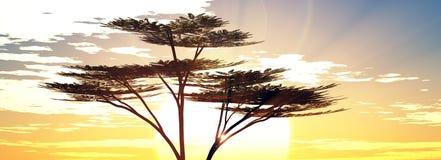 Sunshine sunrise in the savannah Royalty Free Stock Photography