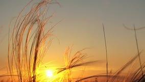 Sunshine At Sunset stock video