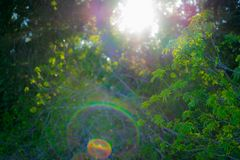 Sunshine to the forest in spring. It was taken in Spring in California Park Royalty Free Stock Photo