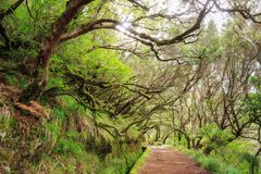 Sunshine trail Madeira royalty free stock images