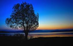 Sunshine tree Royalty Free Stock Images