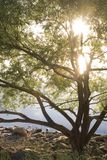 Sunshine tree. Tree on shore line with morning sun rising throught it's branch Stock Images
