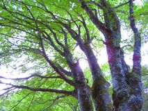 Sunshine and tree Royalty Free Stock Photos