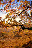 Sunshine through tree branches in autumn Stock Photography