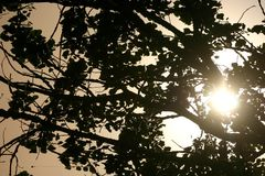 Sunshine Through Tree Branches Stock Photography