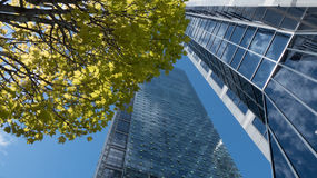 Sunshine tree crown modern skyscraper Stock Photo