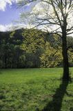 Sunshine, Tree, Meadow. Spring Sunshine, Tree, Meadow, Oconaluftee, Great Smoky Mtns NP, NC stock photography