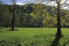 Sunshine, Tree, Meadow. Spring Sunshine, Tree, Meadow, Oconaluftee, Great Smoky Mtns NP, NC stock photos