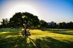 Sunshine through the tree. Sun shines through a tree at zakir rose garden, chandigarh, india Royalty Free Stock Images