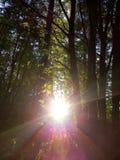 Sunshine. Tree wood Stock Photos