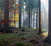 Sunshine and trees stock image