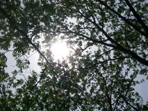 Sunshine Through The Trees. A back-lit photo of leaves and branches Royalty Free Stock Photos