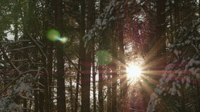 Sunshine through the trees stock footage