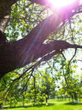 Sunshine through the trees Royalty Free Stock Photos