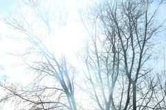 Sunshine Through Trees. Sky and sunshine through the trees. Tree branches outlines through bright sun Royalty Free Stock Photo