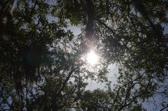 Sunshine Through The Trees. Sun shining through the trees in the middle of forest Stock Photos