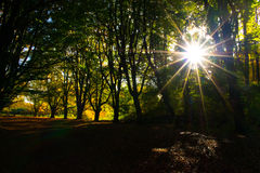 Sunshine trough the trees. Trees sun woods dark Royalty Free Stock Photography