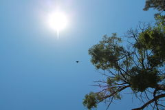Sunshine. It was a very hot day Royalty Free Stock Photos