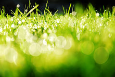 Sunshine on wet grass Royalty Free Stock Images