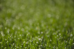 Sunshine on wet grass. Bokeh caused by sun hitting fresh raindrops on grass Royalty Free Stock Images