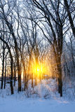 Sunshine in winter forest Royalty Free Stock Photos