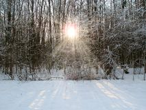Sunshine in a winter forest Stock Photo