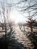 Sunshine on Winter Landscape Royalty Free Stock Images